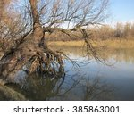 trees reflection in water at... | Shutterstock . vector #385863001