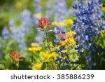 Wildflowers On Mt. Baker. A...