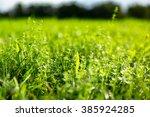 green meadow in the sun   Shutterstock . vector #385924285