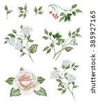 Stock photo watercolor floral set with delicate white flowers and tea rose 385927165