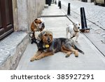 Stock photo dogs are waiting for their dog walker 385927291