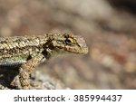lizard looking close up  | Shutterstock . vector #385994437