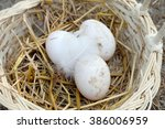 Fresh Muscovy Duck Eggs In The...