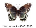 Limenitis Arthemis Astyanax....