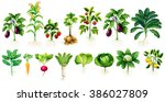 many kind of vegetables with... | Shutterstock .eps vector #386027809