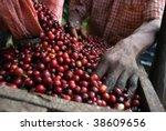 coffee beans   guatemala | Shutterstock . vector #38609656