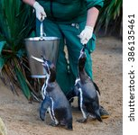 Photo Of Zookeeper Feeding The...