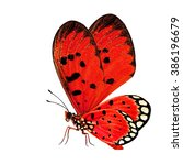 the beautiful red butterfly... | Shutterstock . vector #386196679