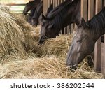 Brown Horses Eating Fresh Hay