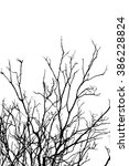 branch silhouette on a white... | Shutterstock . vector #386228824