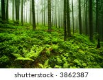 Green Misty Old Forest