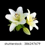 White Lilies Isolated On A...