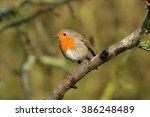robin | Shutterstock . vector #386248489