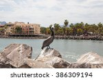 Brown Pelican  Sitting On A...