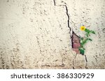 Yellow Flower Growing On Crack...