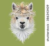 Llama Animal Portrait....