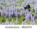 nature photography   dslr on... | Shutterstock . vector #3863470
