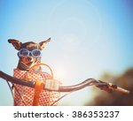 a cute chihuahua riding in a... | Shutterstock . vector #386353237