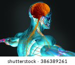 human anatomy 3d futuristic... | Shutterstock . vector #386389261