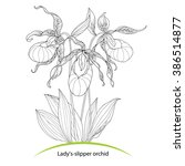 Cypripedium Calceolus Or Lady'...