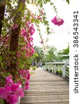 Bougainvillea On Evening With...