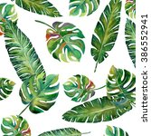 tropical split leaves palm with ... | Shutterstock . vector #386552941