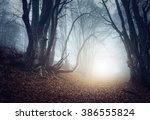 scary mysterious forest in fog... | Shutterstock . vector #386555824