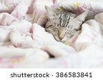 Stock photo cat sleeping in the pink floral blanket selective focus 386583841