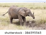 Playing Young Elephant.