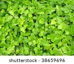 green leafs background  drop of ... | Shutterstock . vector #38659696