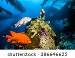 Fishes At Catalina Island