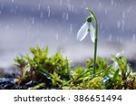 First Spring Flowers Snowdrops...