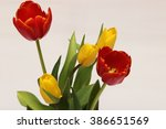 Red And Yellow Tulips On White...