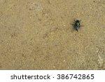 green fly on ground | Shutterstock . vector #386742865