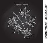 acer japonicum  amur maple ... | Shutterstock .eps vector #386856889