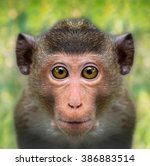 Stock photo funny monkey face close up with big eyes 386883514