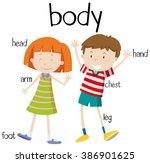 human body parts diagram...   Shutterstock .eps vector #386901625