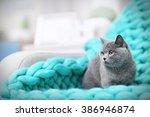 cat resting on warm wicker... | Shutterstock . vector #386946874