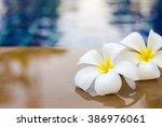 plumeria white   Shutterstock . vector #386976061