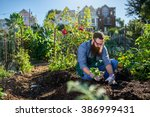 Bearded Millennial Harvesting Beets An - Fine Art prints