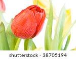 beautiful tulips isolated on... | Shutterstock . vector #38705194