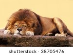 African Lion Sleeping On A Fla...
