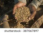 colse up of a farmer's hand... | Shutterstock . vector #387067897