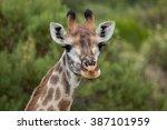 giraffe african mammal nature... | Shutterstock . vector #387101959