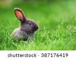 Little Rabbit On Green Grass I...