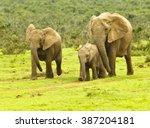 elephant family walking down a... | Shutterstock . vector #387204181