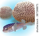 balloonfish and corals favia.  | Shutterstock . vector #387288871