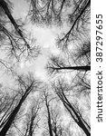 bare trees in a symmetric wide... | Shutterstock . vector #387297655