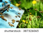 domestic bees . swarm of bees... | Shutterstock . vector #387326065