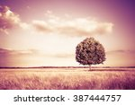 Isolated Tree In A Tuscany...